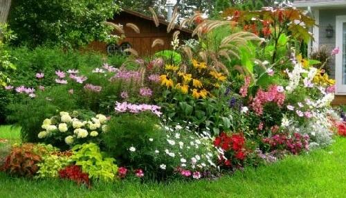 Фото клумбы с высокими цветами