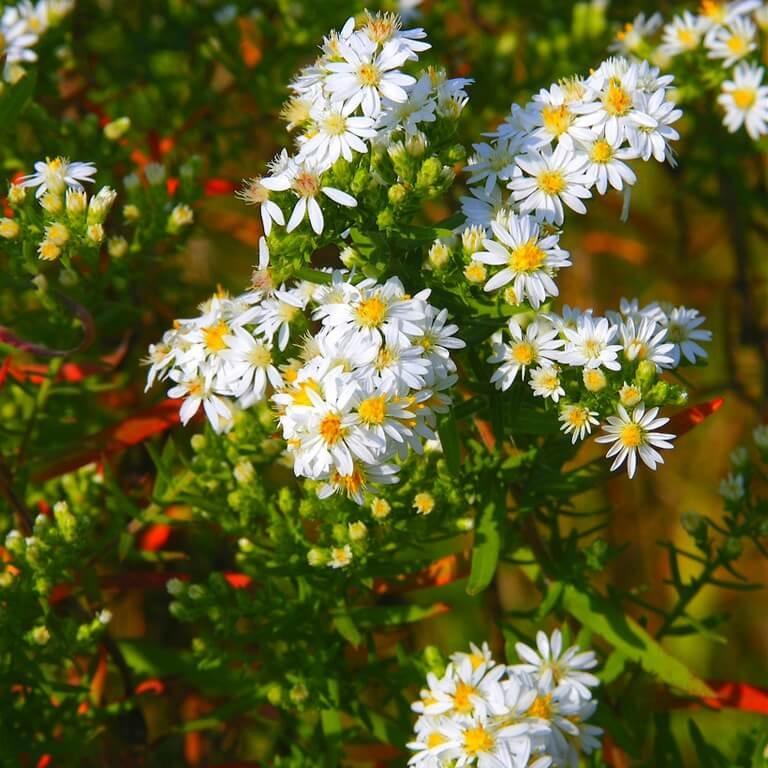Фото цветка Астильба