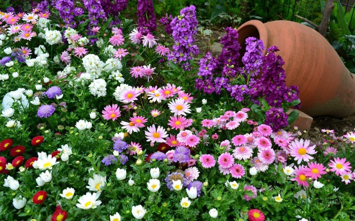 Фото красивых цветов на клумбе