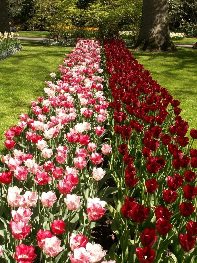 Фото красно-розовой клумбы