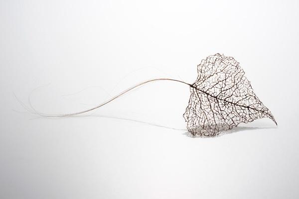 leaves-4_01