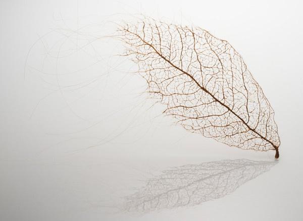 leaves-3_01