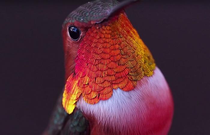 200-hummingbirds-complain-ucla-researcher-melanie-barboni-4-59a7b8a86250d__700_01