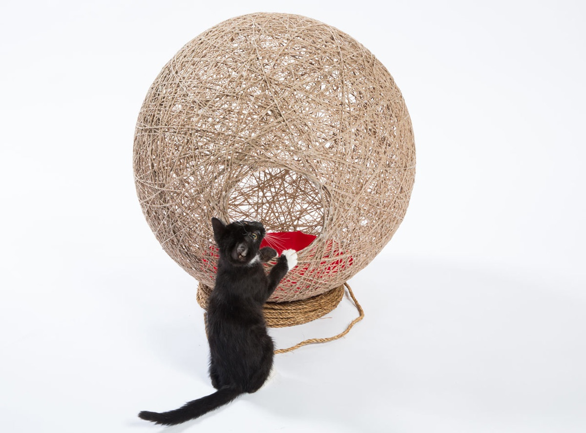catdwelling_03_01