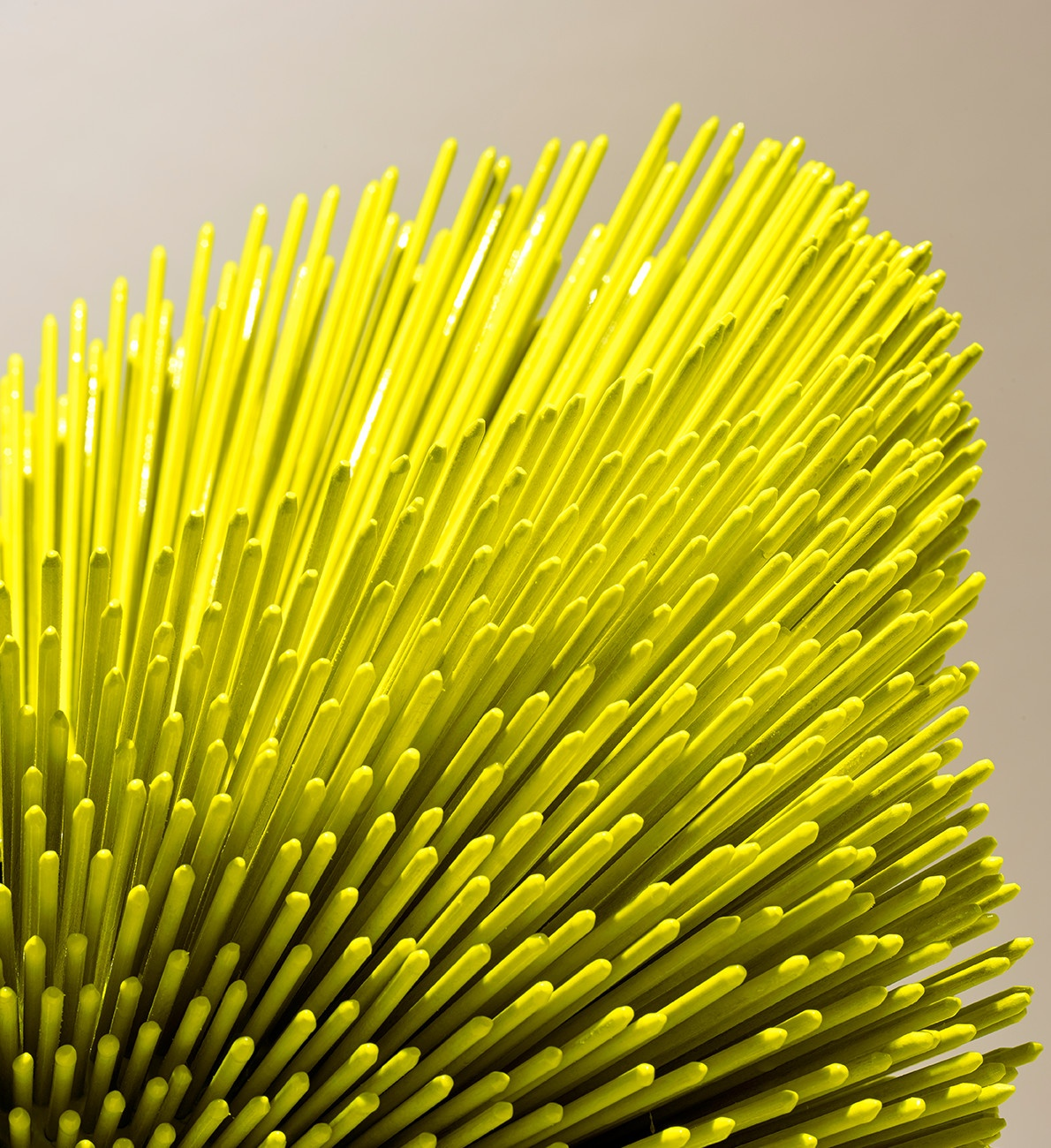 sea-anemone-yellow-3-header_01