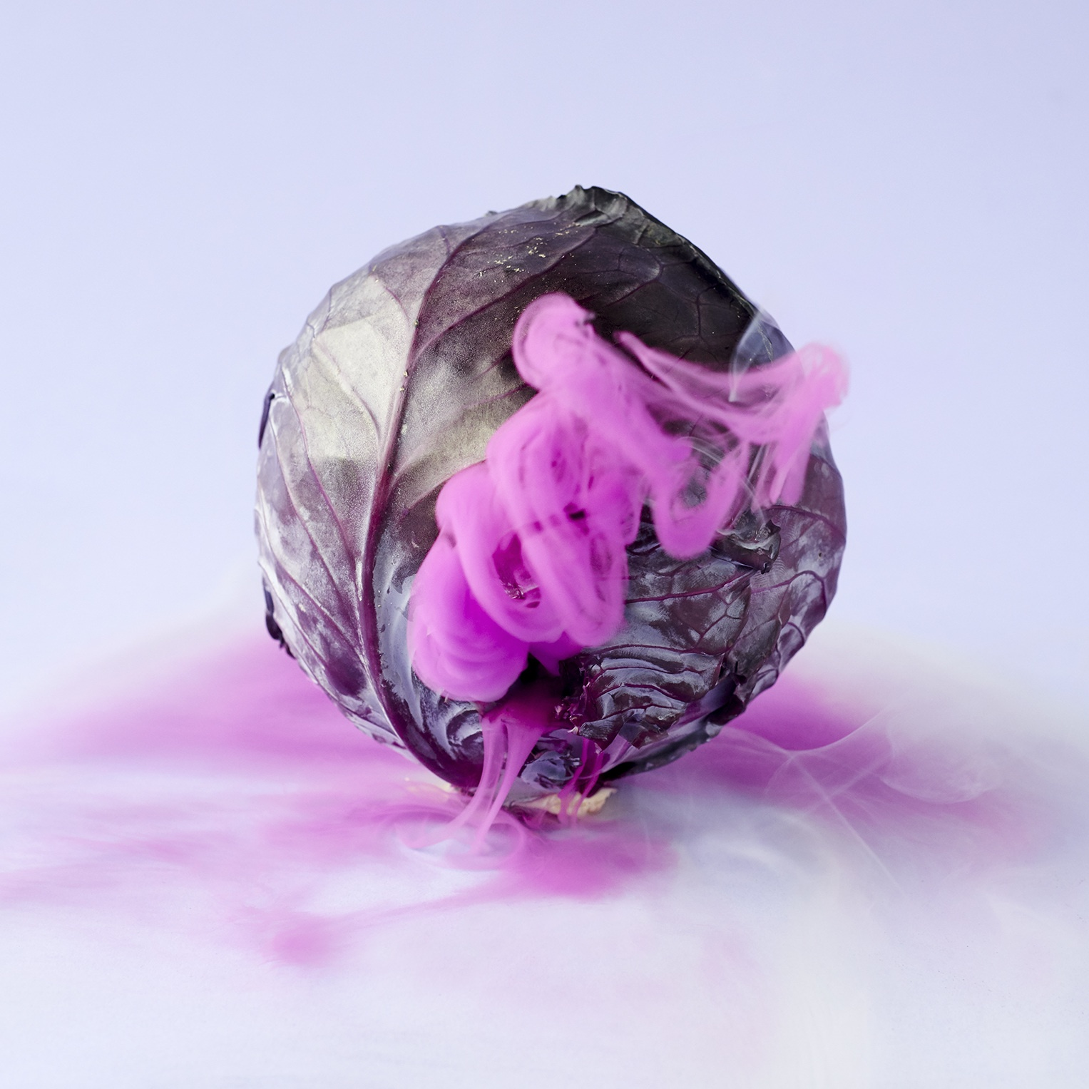 02-red_cabbage_1527_01