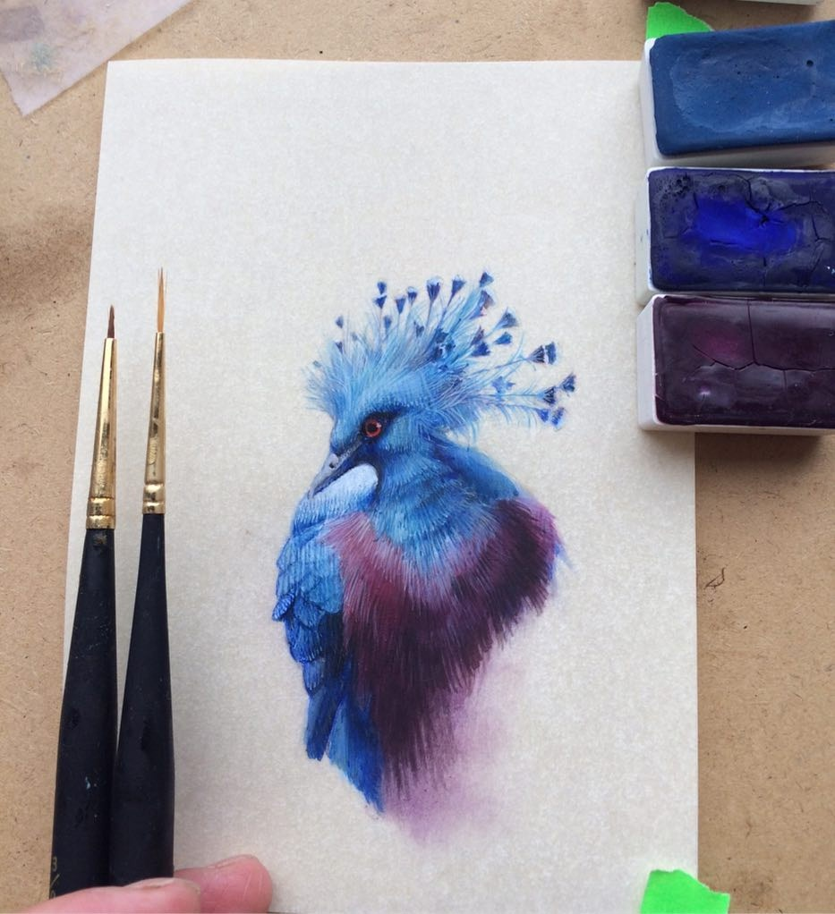 birds-4_01