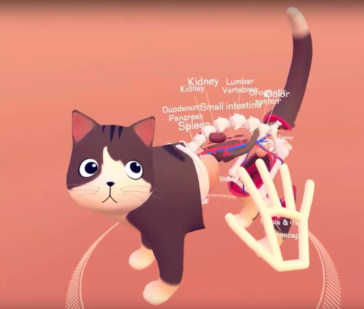 cat-explorer_01
