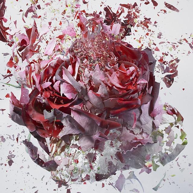 flower-2_04