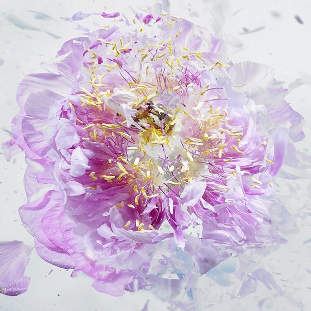 flower-1_07