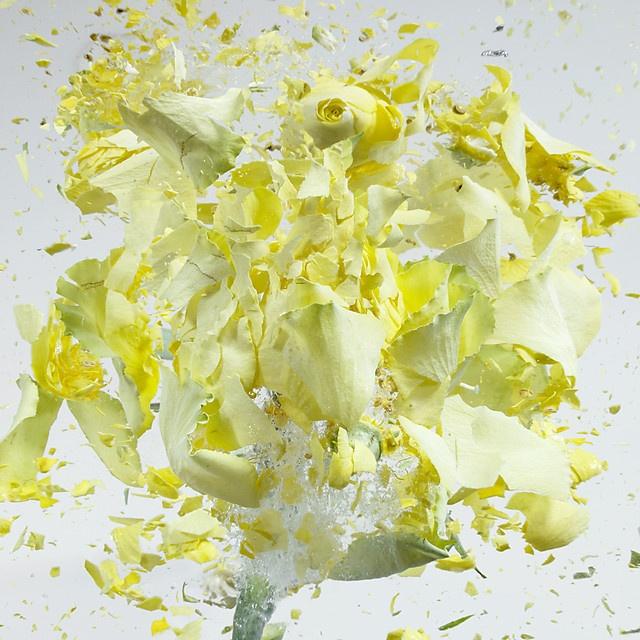 flower-3_03