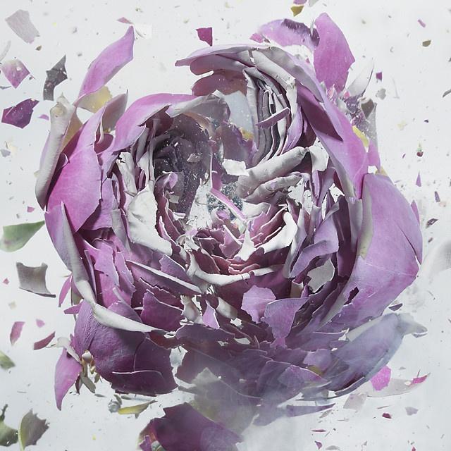 flower-5_05