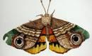 Текстильные бабочки с невероятно живой текстурой