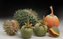 Потусторонние тропические фрукты и растения Уильяма Кидда