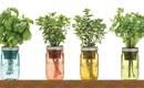 10 трав, которые можно выращивать в кастрюле с водой на кухне