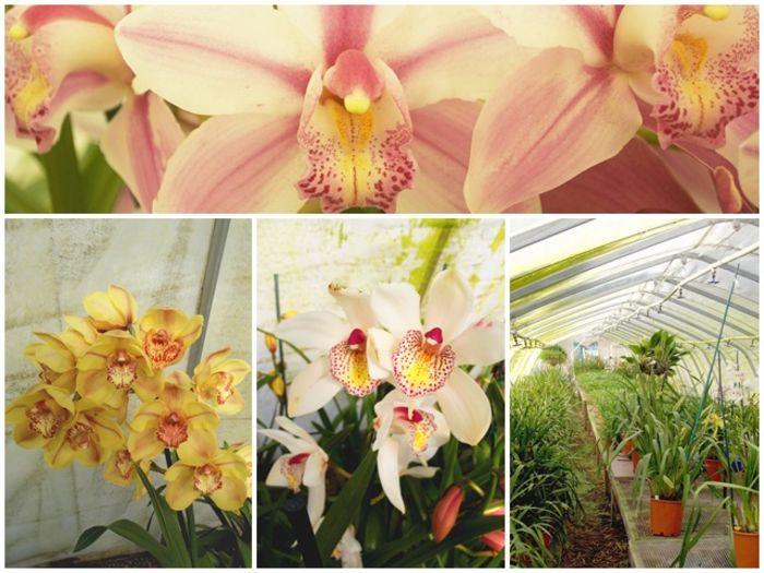 linesa.ru/home/flowers
