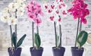 Как ухаживать за орхидеей: хитрости и курьезы, о которых вы должны знать