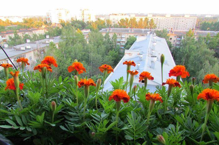 balkonyi.ru