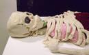 Скелет в натуральную величину и органы, связанные крючком из шерсти